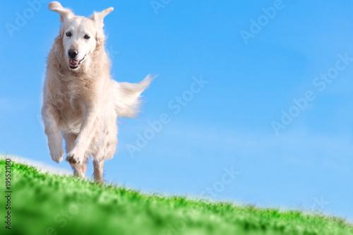 Perros corriendo y jugando  en el parque.Perros y mascotas.Entrenamiento y educación de animales de compañia.