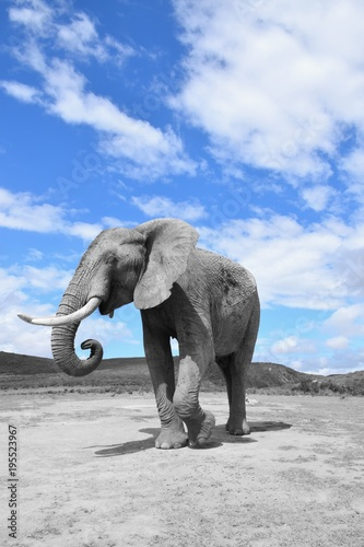 Fototapeta Afrikanischer Elefant von vorne, selektierte Farbe