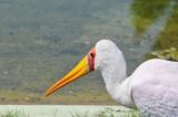 Grande pássaro branco de bico amarelo