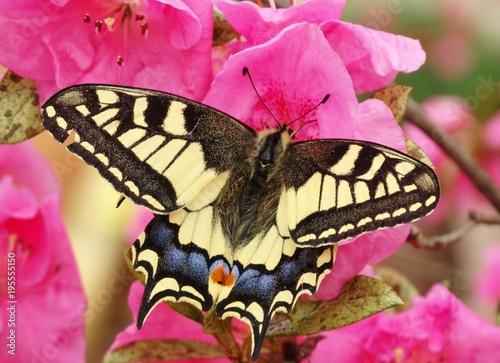 kolory motyla
