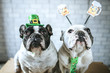 Couple of dogs with disguise for Saint Patrick's Day