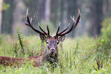 Red deer in forest - 195582978