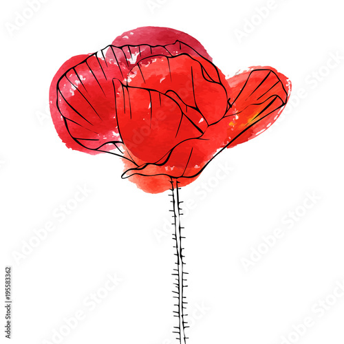 vector drawing flower of poppy - 195583362