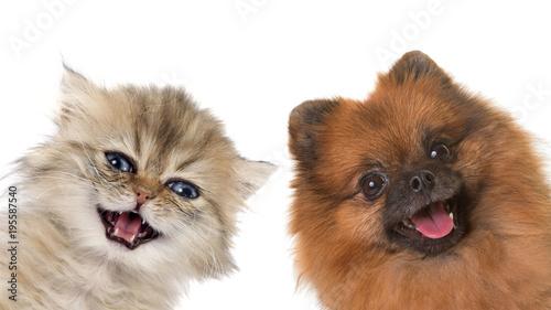 Fotobehang Kat kitten and puppy