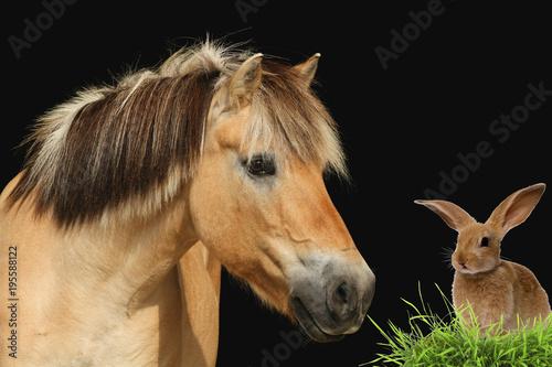 Koń fjordu spotyka się z wielkanocnymi zajączkami