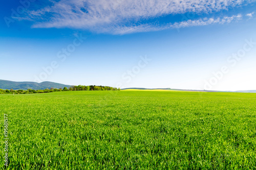 Papiers peints Herbe green field and blue sky