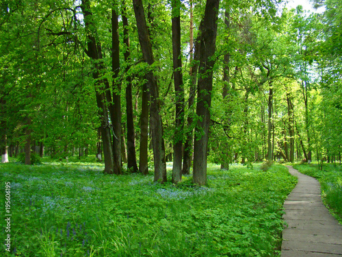 Foto op Canvas Natuur Park alley in spring