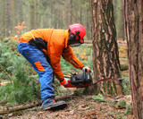 The Lumberjack working in a forest. Harvest of timber. Firewood as a renewable energy source. Agriculture and forestry theme. People at work.  - 195609951