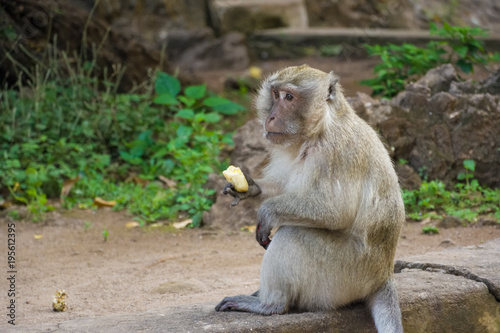 Fotobehang Thailand Thailand, Phuket, 2017 - Monkeys near Big Buddha's temple in a cave