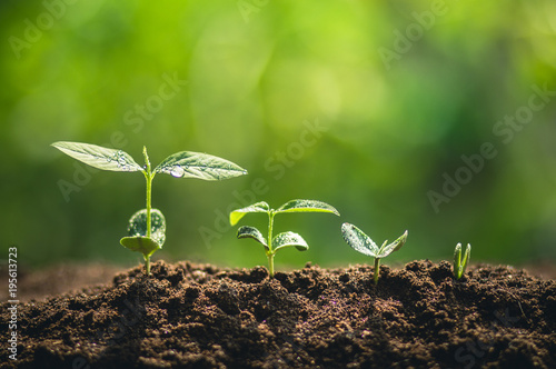 Foto op Canvas Natuur Growth,Young tree plant a tree Watering a tree in nature light and background