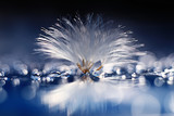 dandelion seeds on a light blue background, lightness, holiday