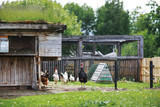 Geese and sheep on a farm - 195641371