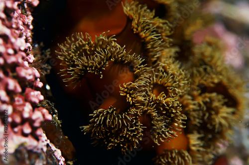 Fotobehang Bruin underwater landscape