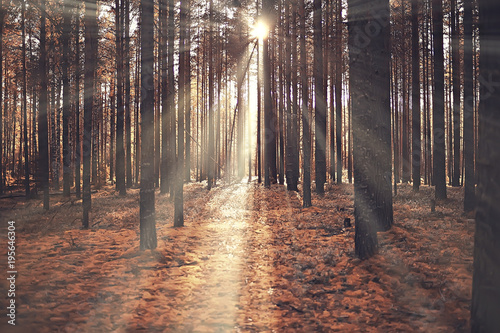 Foto op Aluminium Herfst autumn landscape / sunrays in autumn trees. Sunset in the forest with yellow leaves. Indian summer for a walk in the autumn park. Glare and sun rays concept of landscape in nature