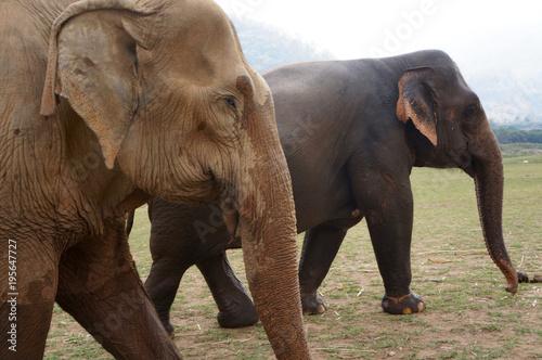 Wall mural Elephants in Thailand