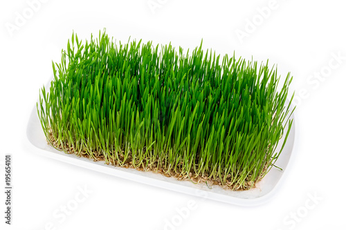 Poster Gras A tray of wheat grass on white.