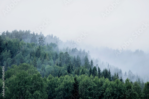 pine trees on mountain in fog - 195654134