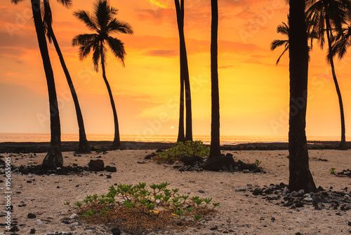 Fotobehang Strand On A Beach In Hawaii