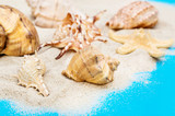 Sand with seashells on blue background. - 195660532