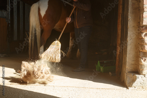 Fotobehang Paarden Pferdepflege