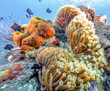 Coral reef off coast of Bali - 195685373