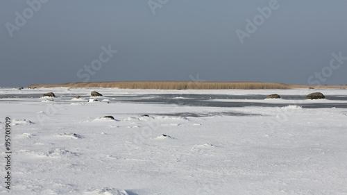 Foto op Canvas Grijs Winter images from Malmö Skåne Sweden