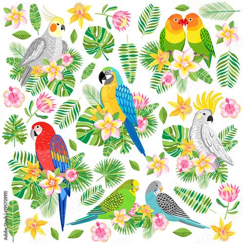 Fototapeta Vector parrot illustration. Tropical bird isolated