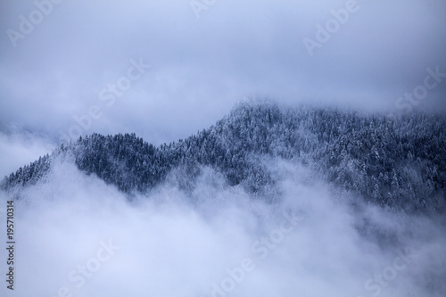 Śnieżne sosny mgła