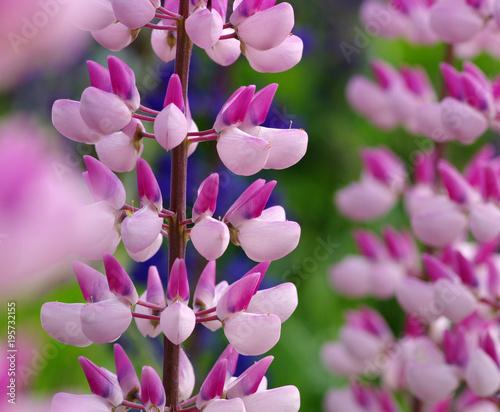 kwiat-na-zielonym