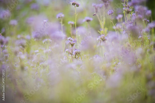 Fotobehang Lavendel Frühlingserwachen