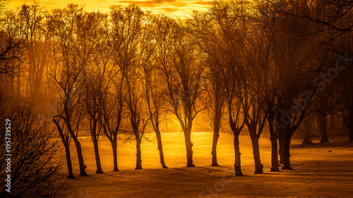 Fotobehang Bruin Arbre en automne