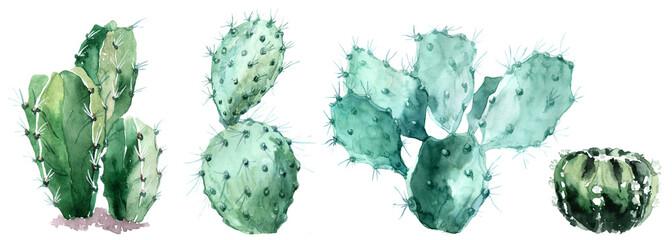 Watercolor set of cactus  isolated illustration on a white background © Anastasiia