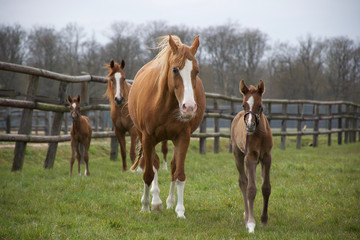 Foals and mothers