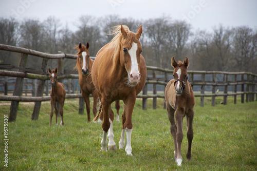 Fotobehang Paarden Horses