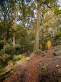 path in an autumn beech forest on a steep hillside with fallen leaves in yorkshire england - 195756548