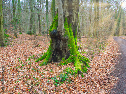 Staande foto Weg in bos Moos, Wald