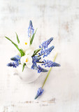 Grape hyacinths and white crocus flowers in a vase - 195766343