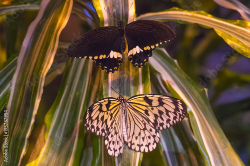 Fotobehang Vlinder A beautiful tropical butterfly sits on an exotic background.