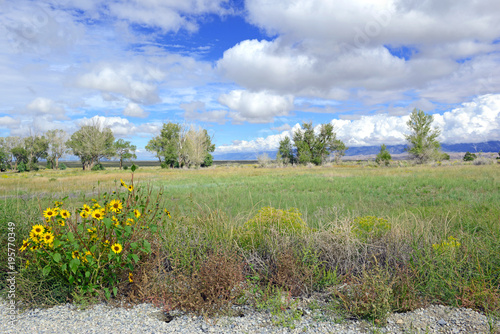Foto op Canvas Olijf Yellow Wildflowers in meadow in the Rocky Mountains