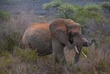 Elephants in Tsavo National Park, Kenya - 195772305