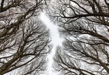 Detailed tree branches or Heavenly road - Russia - 195778123