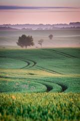 Beautiful dawn at green field in summer, Poland