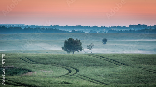 Fotobehang Zalm Cold dawn at foggy green field in summer, Poland