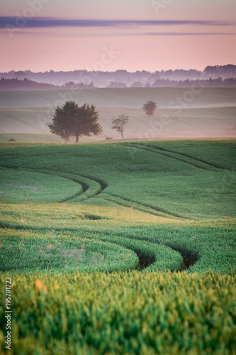 Fotobehang Zonsopgang Beautiful dawn at green field in summer, Poland