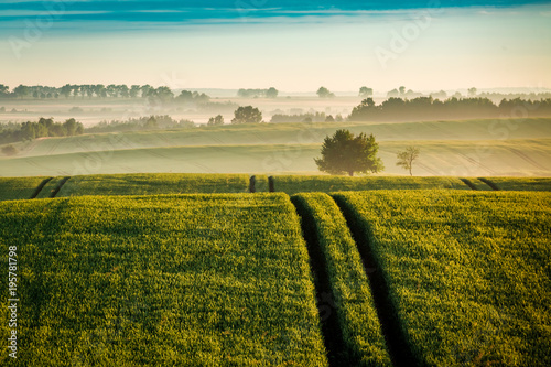 Fotobehang Honing Foggy sunrise at green field in spring, Europe