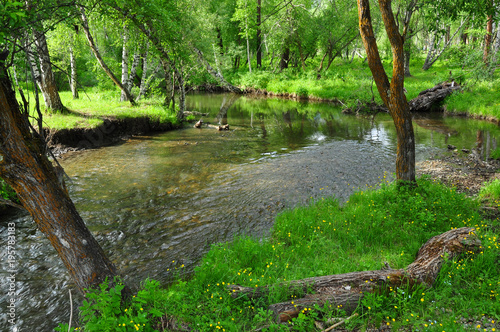 Fotobehang Groene A small river in the green forest. Summer landscape