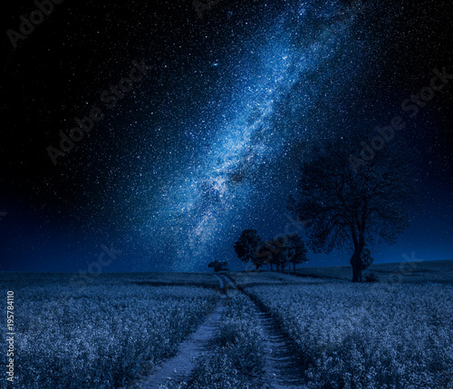 Tuinposter Heelal Field and milky way with trees in summer at night