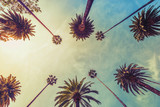 Los Angeles palm trees on sunny sky background, low angle shot. Vintage tone - 195796968