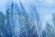 ombres de palmes sur mur en crépi bleu