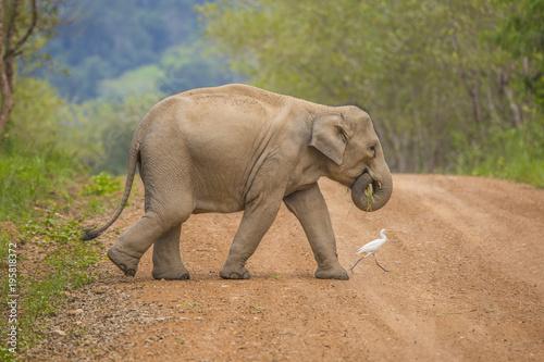 Fototapeta Asia wild elephants is so cute